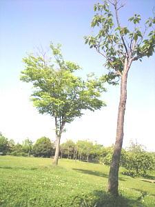 Photo139